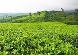Day Trip to Bogor city : Explore Beautiful Tea Plantation & Safari Park