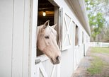 Historic Horseback Ride - 1.5 Hour