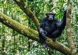 3 Days Kibale Chimpanzee Tracking Tour