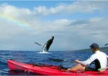 Kayak Whale Watch and Turtle Reef Snorkel
