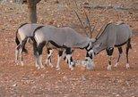 8 Day Etosha Safari Private Guided Tour Namibia