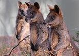 Canberra: Wildlife Encounters at Tidbinbilla Nature Reserve