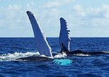 Samana Whale watching By air