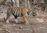 Panna National Park Day Trip from Khajuraho