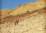 Daily hike to the negev desert