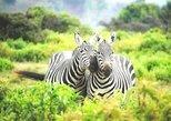1 Day Lake Mburo Nature Safari Holiday Tour
