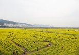 Busan Canola Festival Half-day Tour