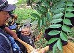 Baboon Sanctuary & Howler Monkey Encounter