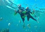 Wave Break Island kayaking,Snorkeling & champagne Tour from the Gold Coast