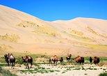 Gobi & Northern Mongolia Tour
