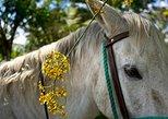 Horseback our Hacienda - 4 hours Coffee Tour