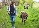 Scenic walks with mini donkeys, picnicking in the beautiful Brecon Beacons