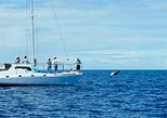 Reef Snorkel & Sail