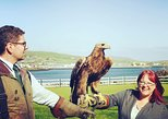 Dingle Falconry Experience - public & daily