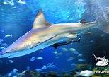 Skip the Line: Inbursa Aquarium Admission Ticket in Mexico City