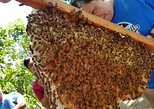 BEEsita Sa Bukid - Guided Bee Farm Tour