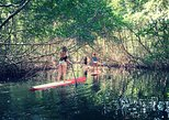 Paddle Board Mangrove Excursion - Randonnée Mangrove Paddle Board