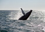 Deluxe Whale Watching and Whales of Iceland Exhibition Combo from Reykjavik
