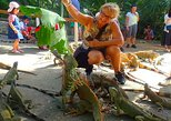2 Snorkel Stops: Shipwreck, Blue Channel Starfish, Iguana Farm & City Tour