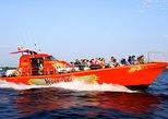 1000 Islands WildCat High-Speed Adventure Cruise