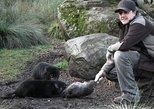 After Dark Tasmanian Devil Feeding Tour At Cradle Mountain