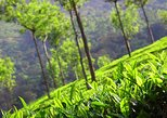 6 Nights 7 Days Kerala Private tour with Hillstations,Backwater &Beaches