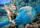 Giftun Island Snorkeling Sea Trip - Hurghada