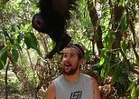 BABOON SANCTUARY(black howler monkey) and ALTUN HA