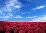 Japanese Autumn Colors - One Day Flower Park Bus Tour