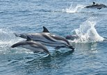 Dolphin Watching Excursion in Gibraltar With Optional Top of The Rock Cable Car Ticket