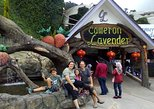 Cameron Highlands: Agro Delight Tour