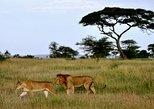 4 Days Ngorongoro-Manyara-Tarangire safari
