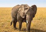 2 Days Northern Tanzania Safari