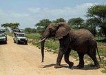12 Days Tanzania Best Wildlife Safari And Zanzibar Beach Holiday