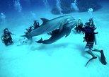 Scuba Diving Boat Trip – Hurghada