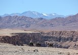Wild Atacama Horseback riding - Expedition
