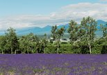 Explore Furano & Biei (Summer Tour)