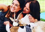 Goat Yoga & Wine Tasting in the Country