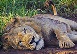 2 Days Akagera National Park Wildlife Safari