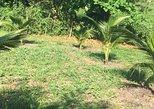 Mini Sustainable Farm