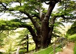 Qadisha Valley, Cedars Forest and Gibran Museum Tour