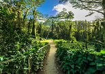 Manoa Waterfall Hike & Nature Walk