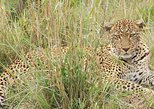 6 days kenya budget safari maasai mara, lake nakuru and Amboseli National Park.