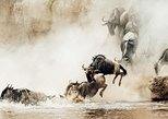 10 Days-Wildebeest Migration Safari