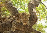Africa & Mid East - Botswana: 6 Days Moremi Game Reserve, Savuti and Chobe National Park,Botswana