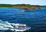 Byron Bay Dolphin Tour - Ocean Safari