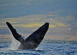 2-Hour Maui Whale Watching Catamaran Cruise