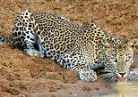 Morning Safari Yala National Park