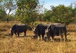 1 Day Rhino Trekking on foot!- Ziwa Rhino Sanctuary