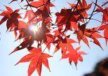 The Beauty of the Korea Fall foliage Discover 9days 8nights